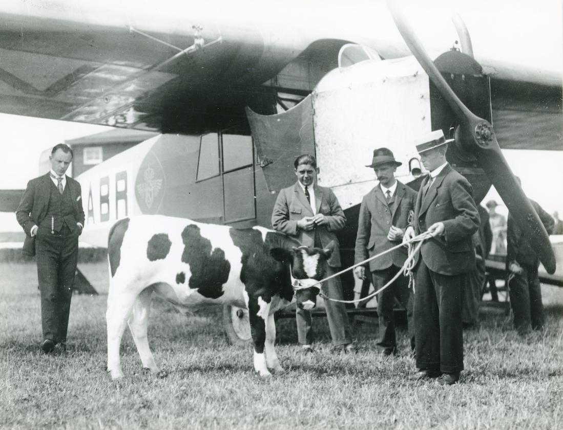 Naam: Foto 364. KLM Fokker F.III op Waalhaven. Fokstier Nico II gaat op transport. 1100 breed.jpg Bekeken: 338 Grootte: 123,0 KB